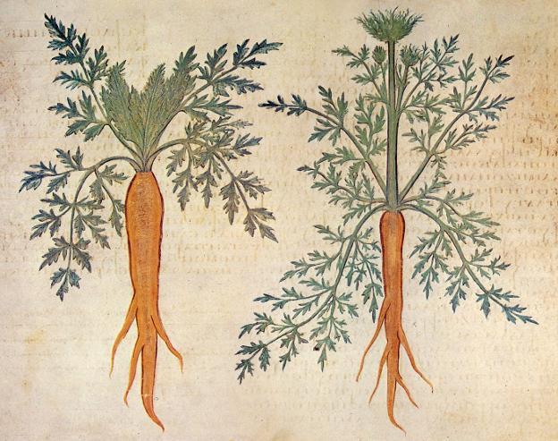 Las Zanahorias Fueron Naranjas Mucho Antes Que Los Orange Degusta La Rioja ¡aprende cómo hacer una torta de zanahoria en 5 pasos! las zanahorias fueron naranjas mucho