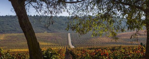 Las Visitas De Enoturismo Caen En La Rioja Alta Mientras Crecen En